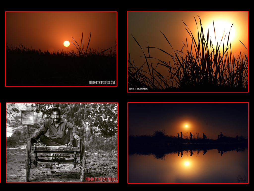 Dana Pani celebrated Care Crow Day Sunset Photo Walk With Photojournalist Sujan Singh in Okhla bird sanctuary.