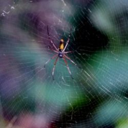 Spider and Web :: The Wait