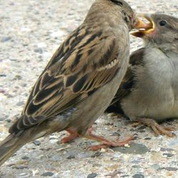 World Sparrow Day :: 20th of March every year
