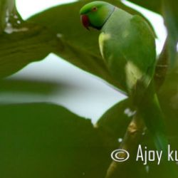 Photo of the Day :: Ajoy Kumar