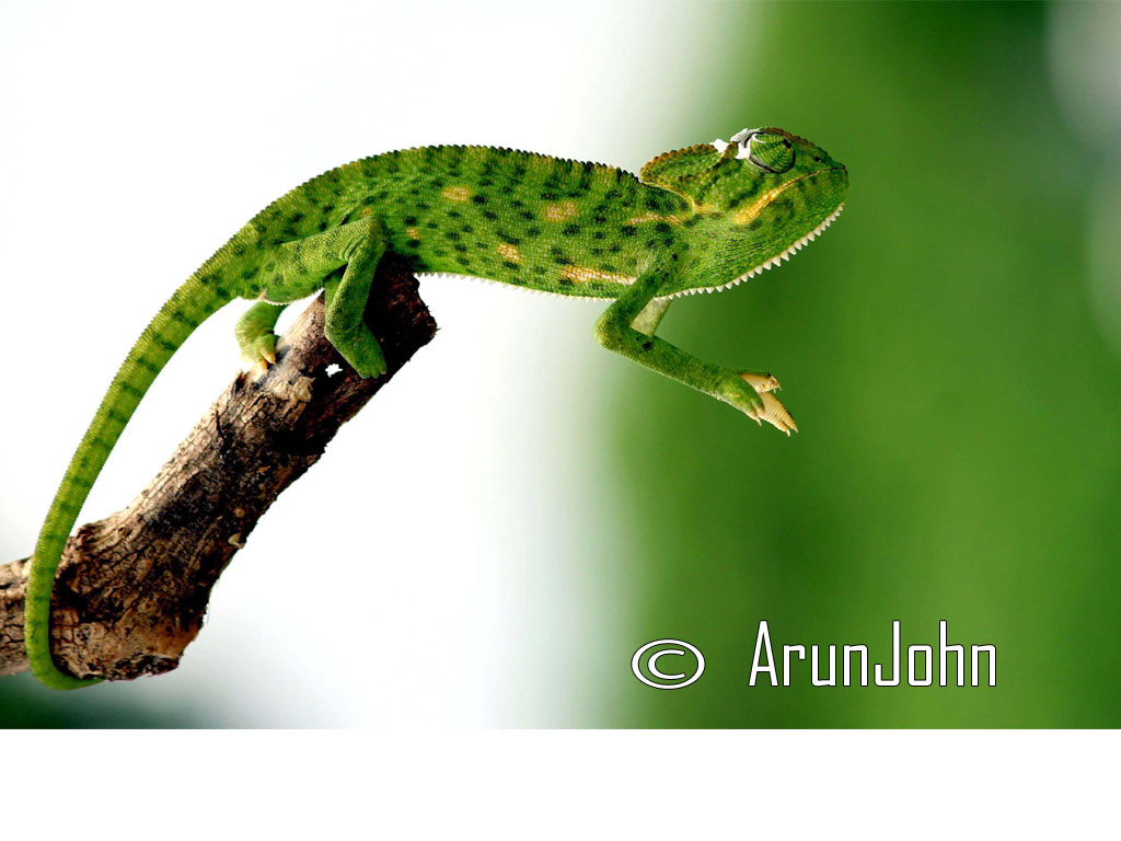 Photo of the Day : ArunJohn - Warangal
